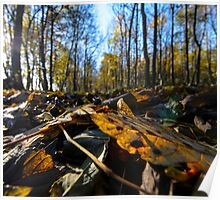 Forest floor in Autumn Poster