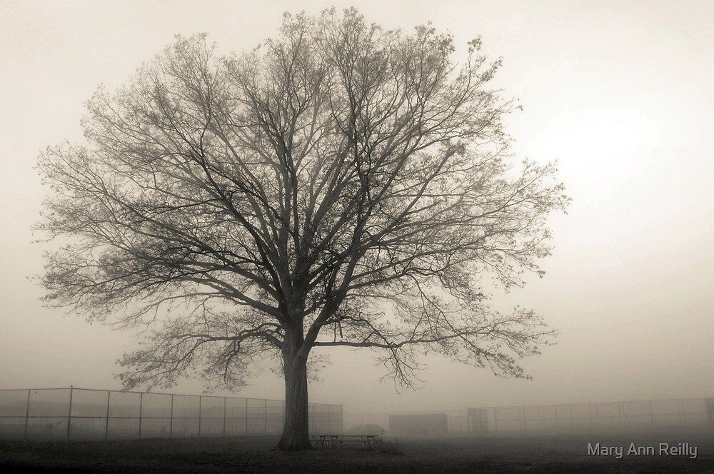 One Tree in Ball Field by Mary Ann Reilly