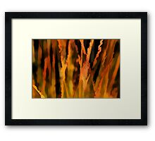 COLOURFUL AUTUMN STRAWS Framed Print