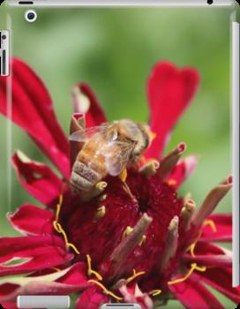 The Bee by AbigailJoy