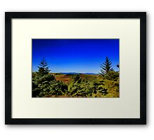 THE GREEN FOREST  Framed Print