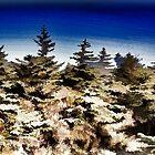 Dark sky & green nature by fedda95