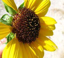 Yellow & Brown by AbigailJoy