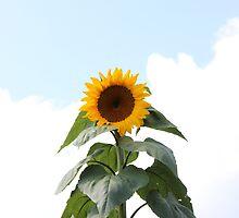 Sunflower by AbigailJoy