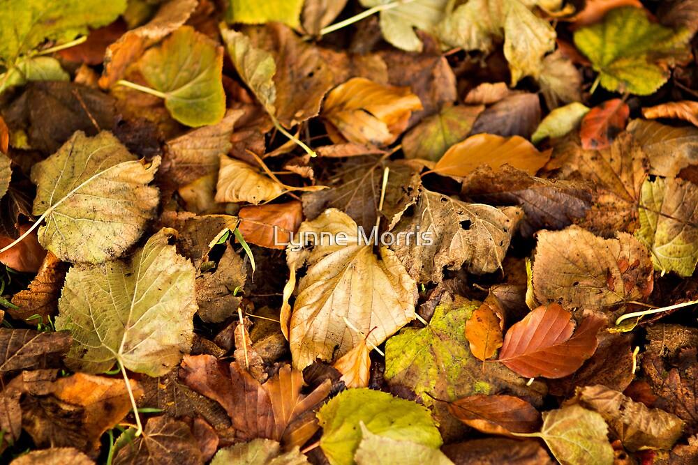 Autumn's Carpet by Lynne Morris