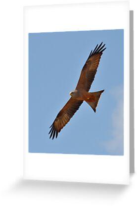 Kite in flight............. by Macky