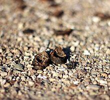 Nuts! by AbigailJoy