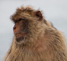 Monkey Business by twinnieE