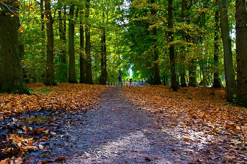 Delamere Forest by twinnieE