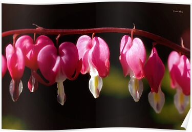 Bleeding Hearts by Yannik Hay