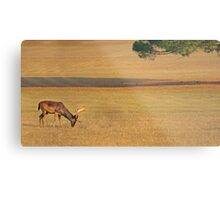 Deer on the grassland Metal Print