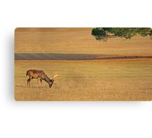 Deer on the grassland Canvas Print