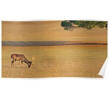 Deer on the grassland Poster