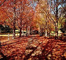 Autumn Magic  by jennyanneok