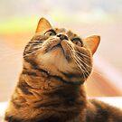 Cat n.1 by Carnisch