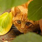 Cat n.2 by Carnisch