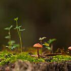Mushroom by César Torres