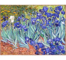 Vincent van Gogh Irises Photographic Print