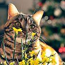 Cat n.6 by Carnisch