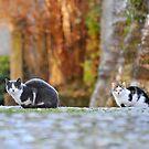 Cat n.8 by Carnisch