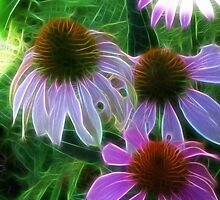 Kathie McCurdy Purple Cone Flowers Abstract by Kathie McCurdy
