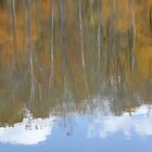 fall reflection  by aroundhome