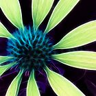 Kathie McCurdy Lime Green Cone Flower Abstract by Kathie McCurdy
