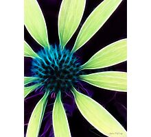 Kathie McCurdy Lime Green Cone Flower Abstract Photographic Print