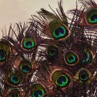 Peacock Feathers by Charlene McCoy