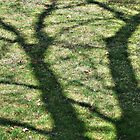 Tree Shadow by 313 Photography