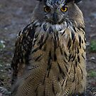 Who do you call a Hooter? by Tom Migot