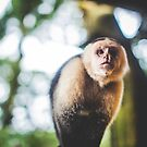 White-Faced Capuchin Monkey by Wanagi Zable-Andrews