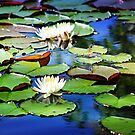 The Lily Pond by Darlene Lankford Honeycutt