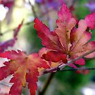 Miniature Maple Leaves by Michelle Ricketts