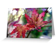Miniature Maple Leaves Greeting Card