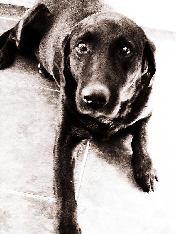 Dog [ iPad / iPod / iPhone Case ] by Mauricio Santana