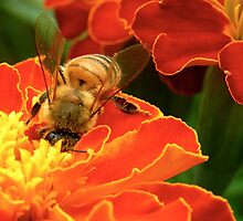 Marigold Bee by Michelle Ricketts