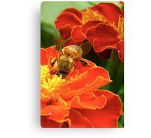 Marigold Bee Canvas Print