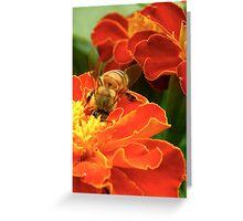 Marigold Bee Greeting Card