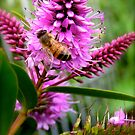 Hebe Honey Bee by Michelle Ricketts