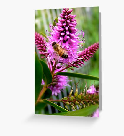 Hebe Honey Bee Greeting Card