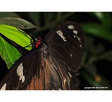 Macro butterfly 001 Photographic Print