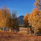 Yellow Aspen by Bill D. Bell