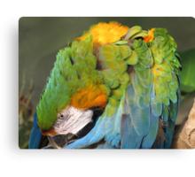 Macaw iridescence Beauty Canvas Print