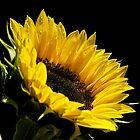 Summer Sun by Helen Vercoe
