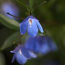 Delicate in Blue by Joy Watson