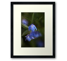 Delicate in Blue Framed Print