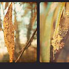Willow Triptych by Sybille Sterk