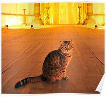 Cat n.12 Poster