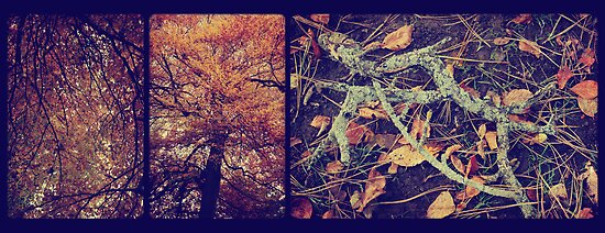 Autumn Leaves Triptych by Sybille Sterk